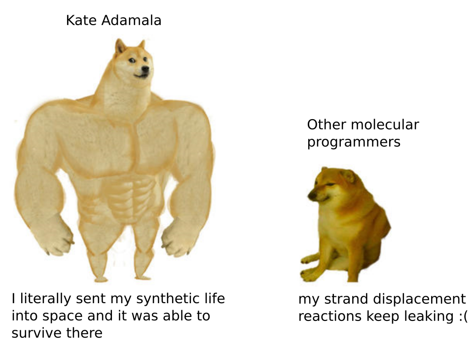 Kate Adamala: I literally sent my synthetic life into space and it was able to survive there; Other molecular programmers: my strand displacement reactions keep leaking :(